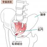 骨盤底筋を効果的に鍛える方法♪