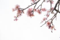 今年の春分図「物質的幸せと精神的幸せの両方を手に入れる」