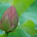 日常に平穏をもたらす瞑想♡