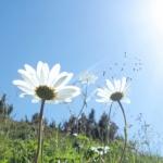 28〜30代前半、太陽期の悩みは人生の花を咲かせるために必要な悩み