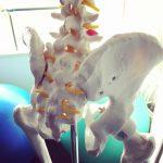骨盤は身体の土台。しなやかな骨盤で得られる安定感